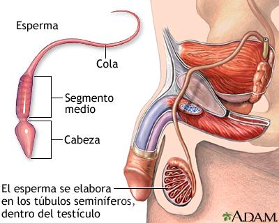 povishenie-prohodimosti-spermatozoidov