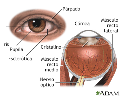 Anatomía interna y externa del ojo - Alexian Brothers Health System